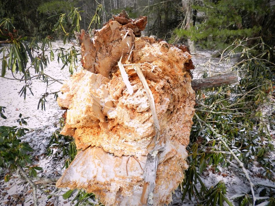 Fall Circle No People Nature Day Outdoors Tree Tree Trunk Water Dead Tree Close-up