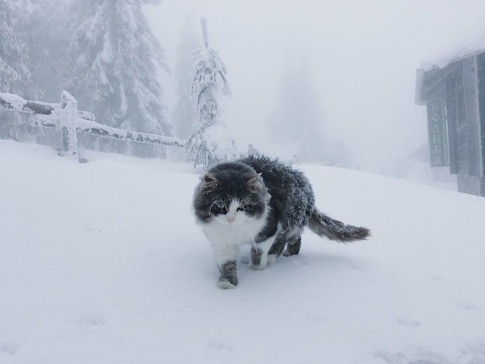 Winter Snow Cold Temperature Weather Animal Themes Domestic Animals Mammal Pets Nature Dog No People One Animal Outdoors Landscape Day Cat