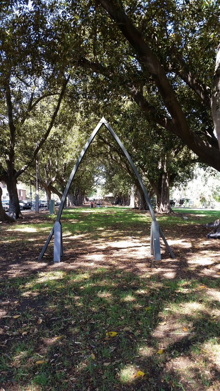 tree, day, park - man made space, no people, outdoors, grass, growth, nature, sky