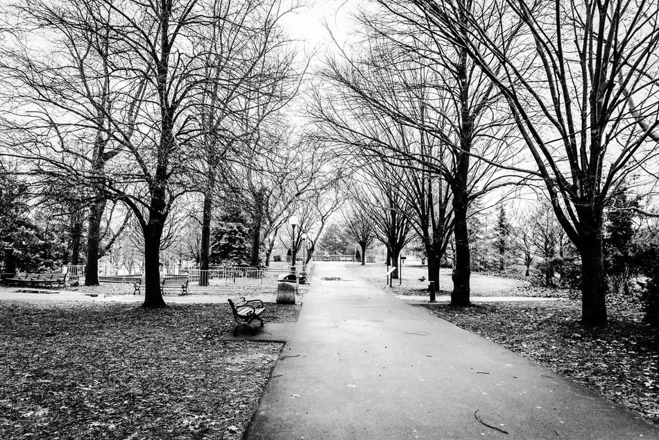 Niagara Falls park Tree Trunk Pathway Footpath Treelined Walkway Black & White Full Length Tree From My Point Of View My Street Photography My Traveling Photography Niagara Falls Outdoors Winter Trees