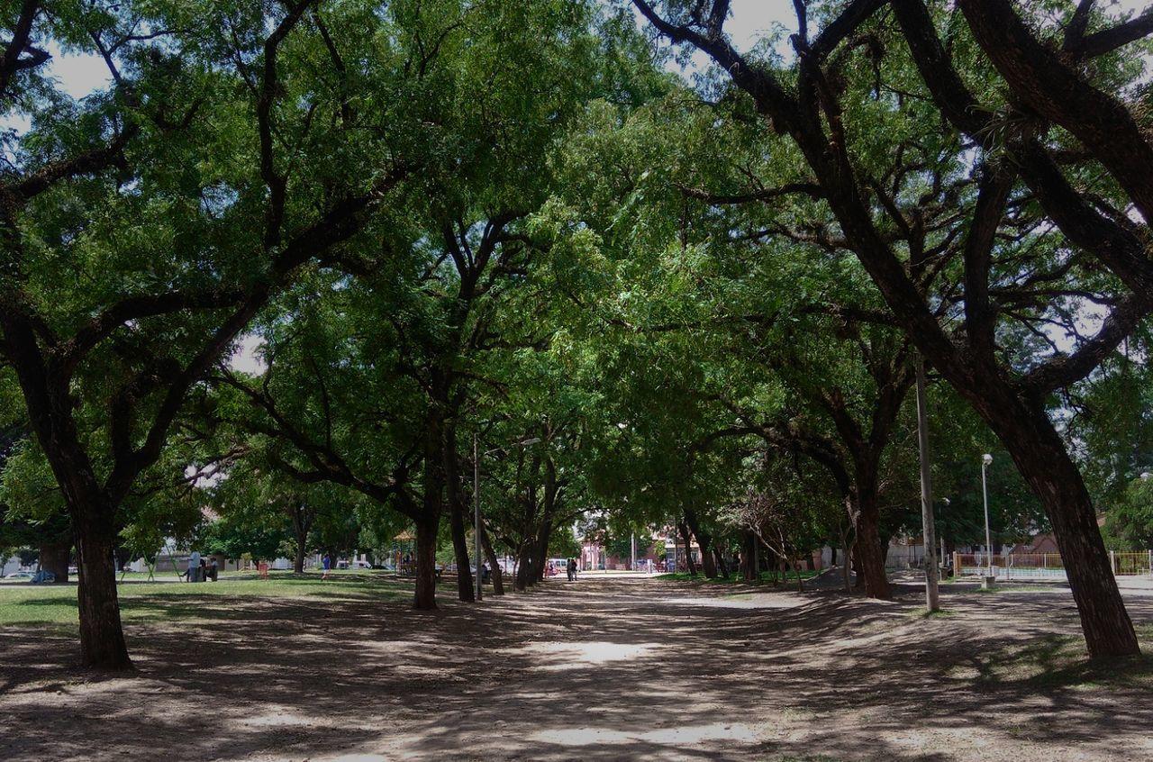Arvos de aboleda en el Gran Parque San Martin Jujuy Argentina. Nature Tranquility Beauty In Nature Argentina 👑🎉🎊👌😚😍 Fotografia San Salvador De Jujuy Jujuy Province Friends