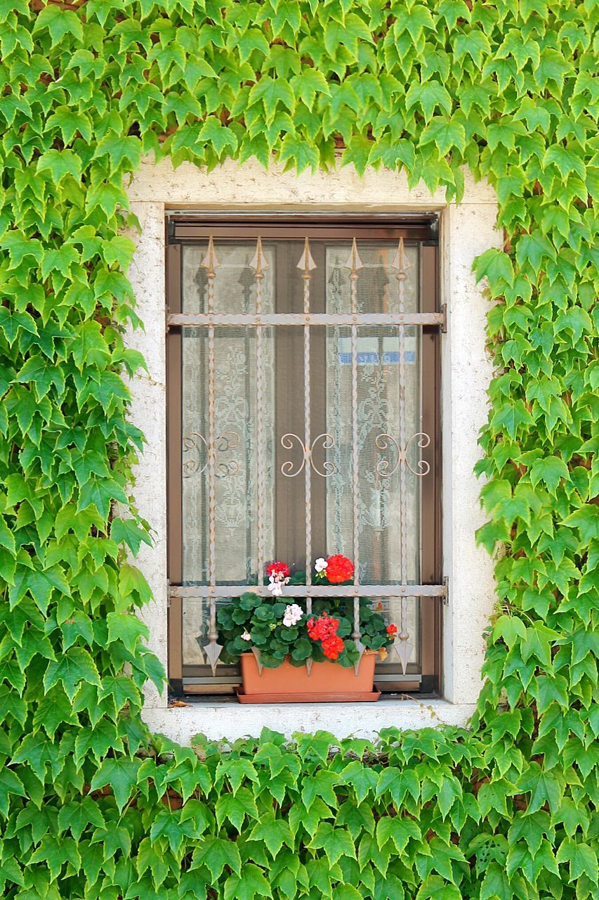 plant, green color, growth, potted plant, window, flower, door, outdoors, leaf, window box, day, ivy, nature, house, lush foliage, built structure, no people, building exterior, tree, beauty in nature, architecture, vine - plant, fragility