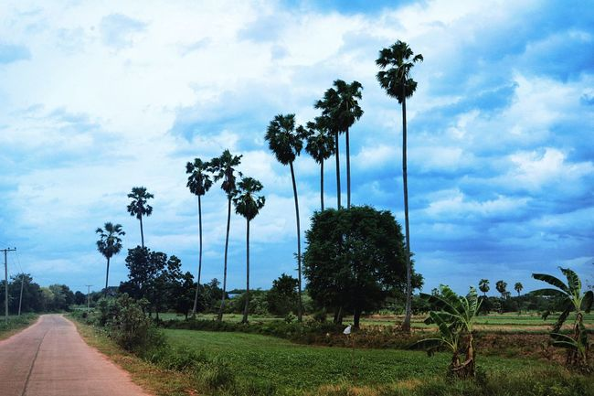Countryside Palm Trees Nature Farm Grassfield Tree Beauty In Nature