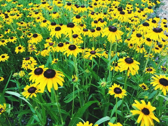 Flowers Forever Yellow Flowers The Little Things In Life Beauty In Nature Peaceful Replication