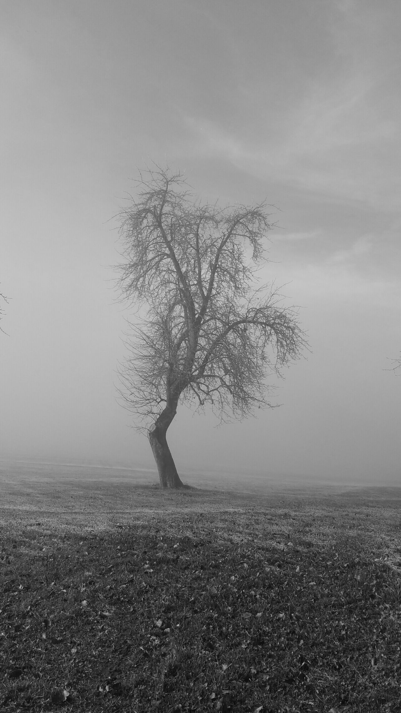 Gray Background Tree Foggy Fog Foggy Day Tree In The Fog Tree Silhouette Unperfect Sadness... Lonely Loneliness Lost Lost In The Fog Black And White Colorless Perfekt Unperfekt Premium Collection Kanton Thurgau Art Is Everywhere