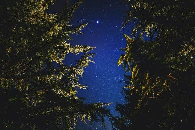 Star - Space Astronomy Constellation Blue Space Sky Night Space And Astronomy Beauty In Nature Galaxy No People Milky Way Moon Tree Outdoors Nature Midnight