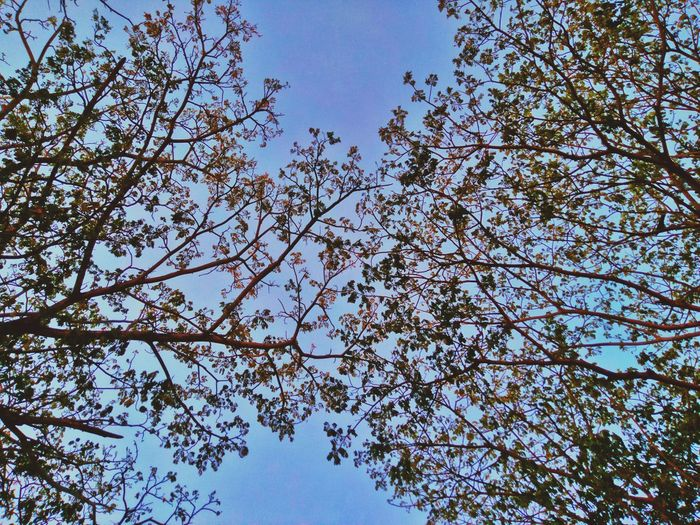 Taking Photo Taking Pictures Simple Photography PhonePhotography Mobilephotography Taking Photos Nature Leaves🌿 Night Fall Leaves Nature Photography Nature_collection IMography Beauty In Nature Simple Penang Pulau Pinang Malaysia Abstract Abstract Photography