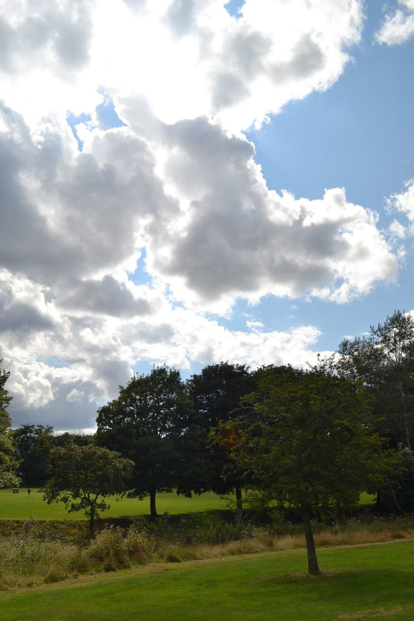 Beauty In Nature Cloud Green Lush Foliage Nature Outdoors Rural Scene Scenics Sun Tree Trees Trees And Sky Vivid Walsall Walsall Arboretum Walsallarboretum