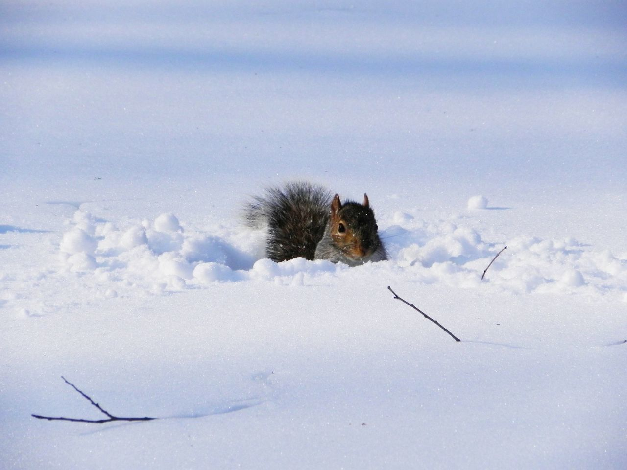 Portrait Of A Squirrel On Snow