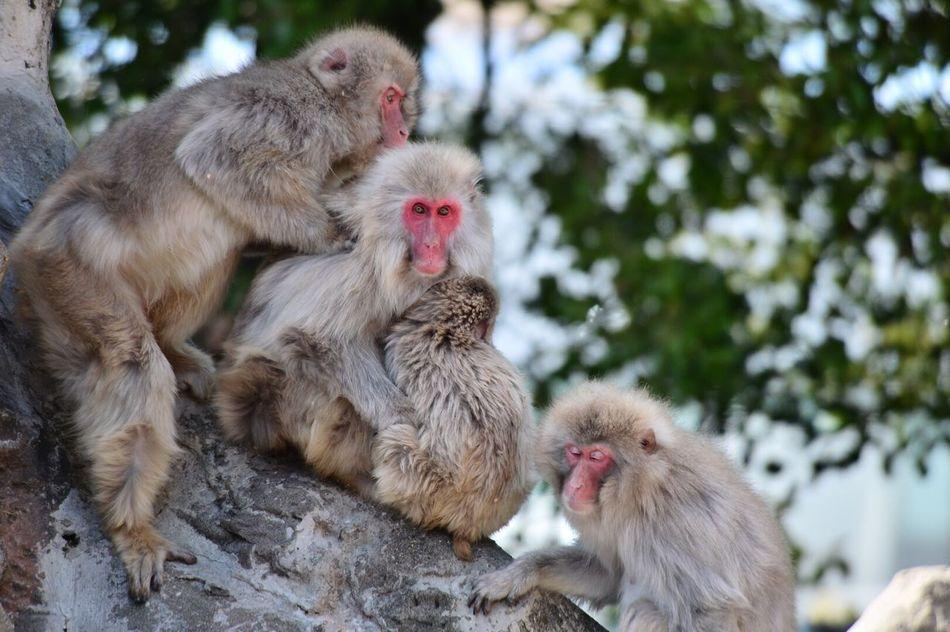 共存 猿 仲間 Monkey Buddy 無加工 写真 Picture First Eyeem Photo