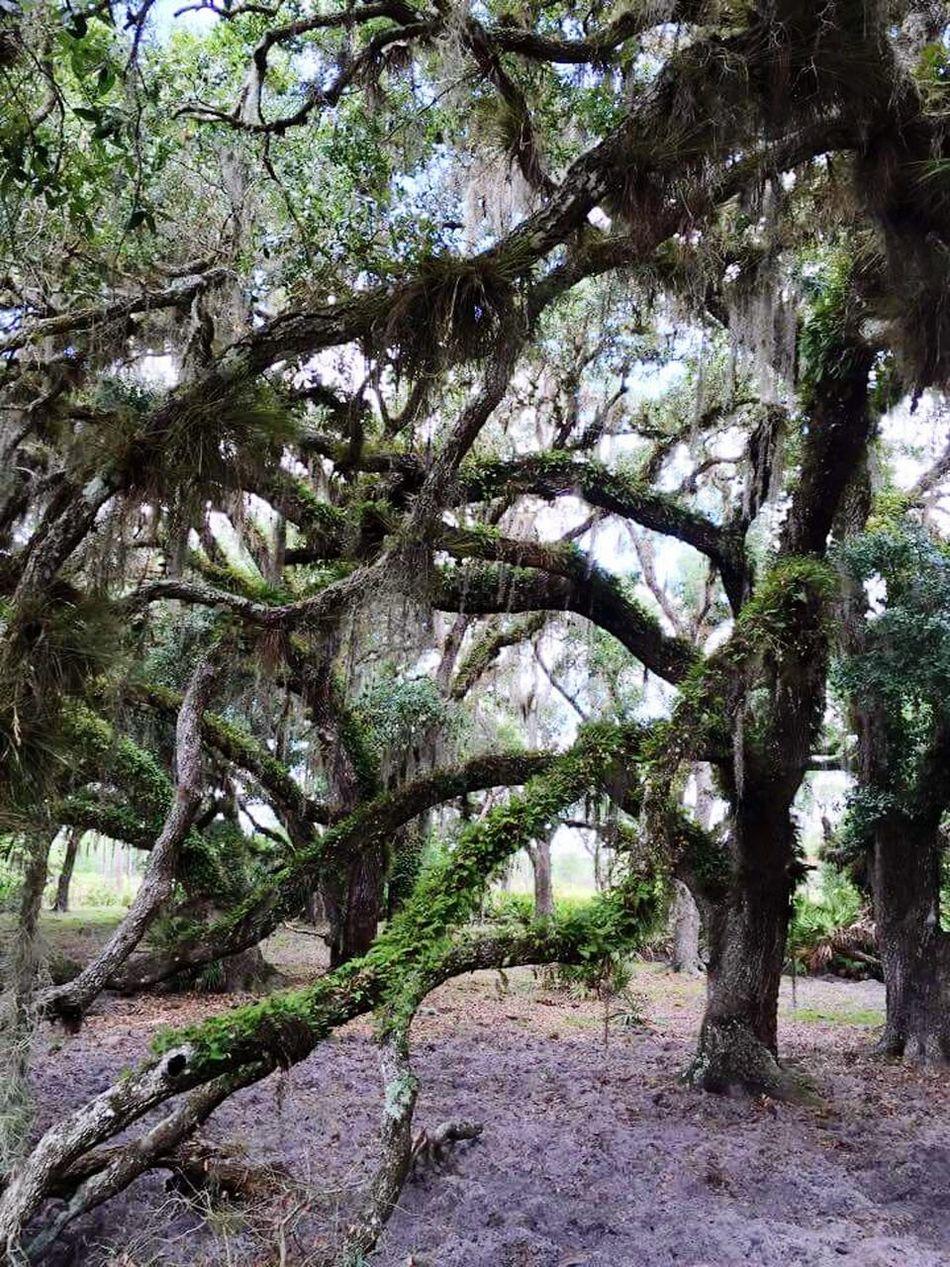 Backwoods Florida Enjoying Life Backwoodsswag Beautiful Nature My Type Of Style