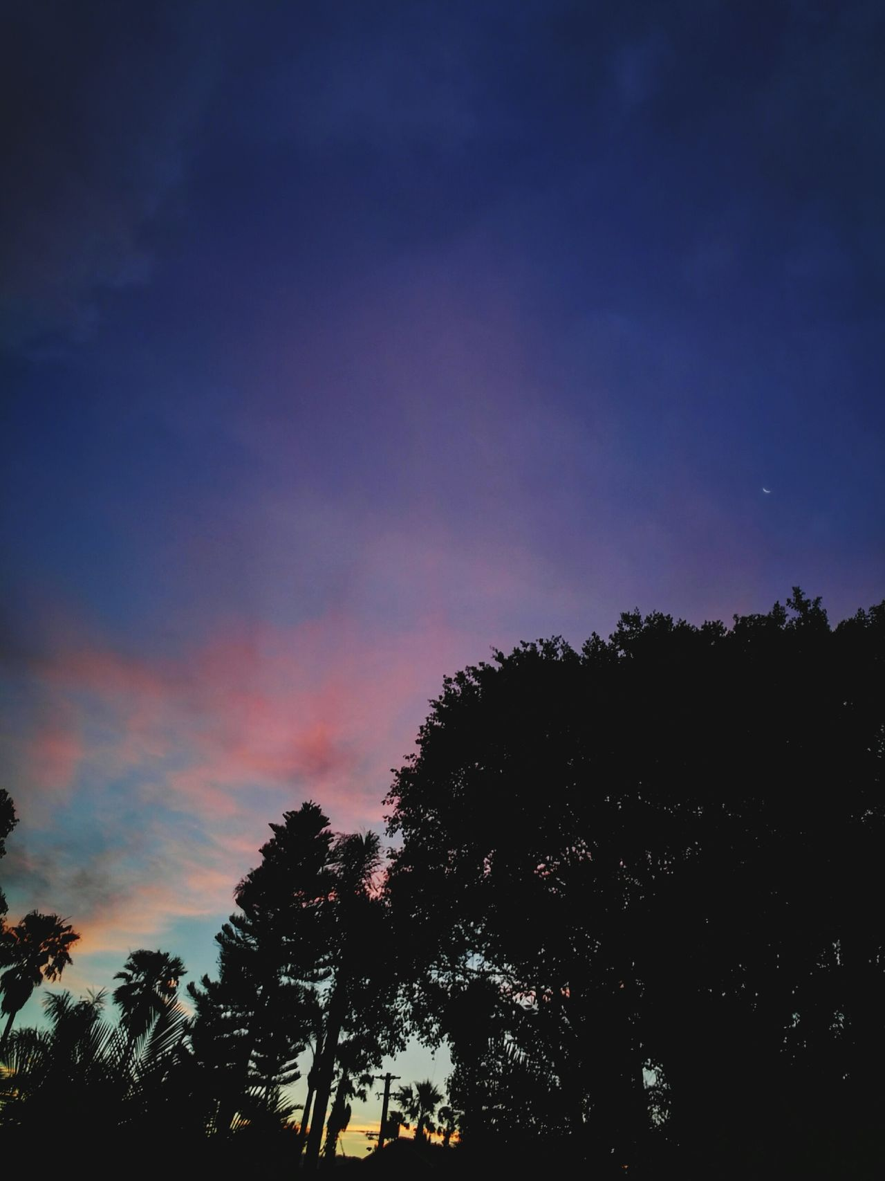 sunset #sun #clouds #skylovers #sky #nature #beautifulinnature #naturalbeauty photography landscape Sunset Silhouettes Silhouette_collection Silhouette Rainbow Sky Palm Tree Palm Trees Palm Tree Silhouette