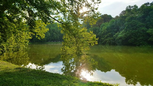 Tree Water Tranquil Scene Scenics Tranquility Growth Reflection Lake Beauty In Nature Nature Non-urban Scene Green Color Day Sky Majestic Sunbeam Lush Foliage Surrounding No People WoodLand