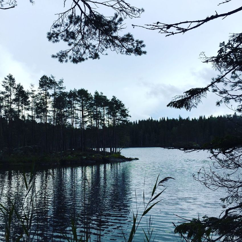Tree Nature Lake Forest Beauty In Nature Hiking Tranquility Sky Water Scenics Growth Reflection No People Outdoors Day Bird Noedit Norway Island View The Week On EyeEm