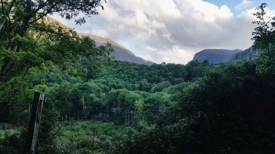 Landscape Forest Nature Tree Mountain No People Day Sun And Mountains Sun And Shadow Ireland Gap Of Dunloe
