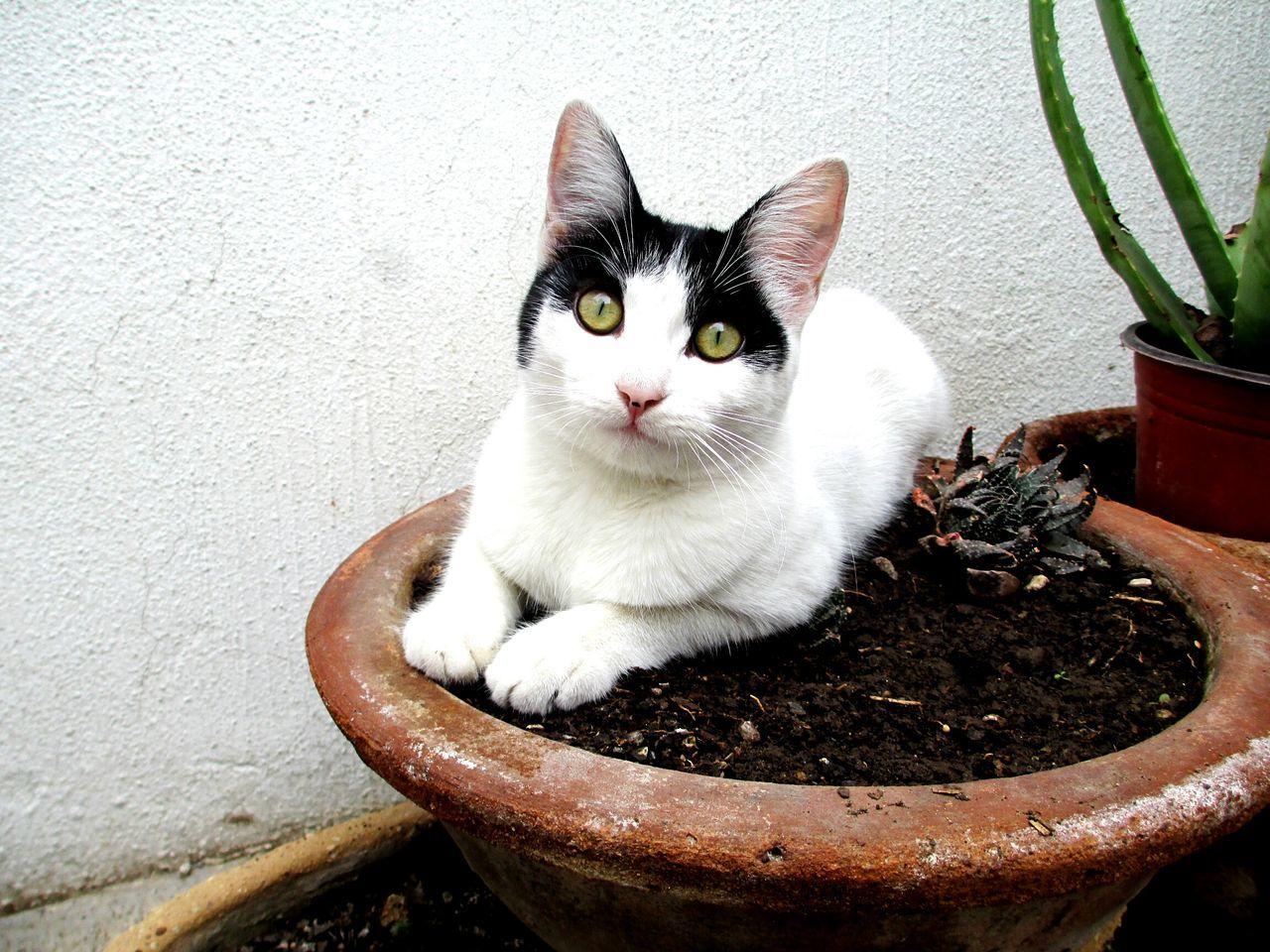 EyeEm Animal Lover Animal_collection Cat Simba Yellow Eyes Lovely