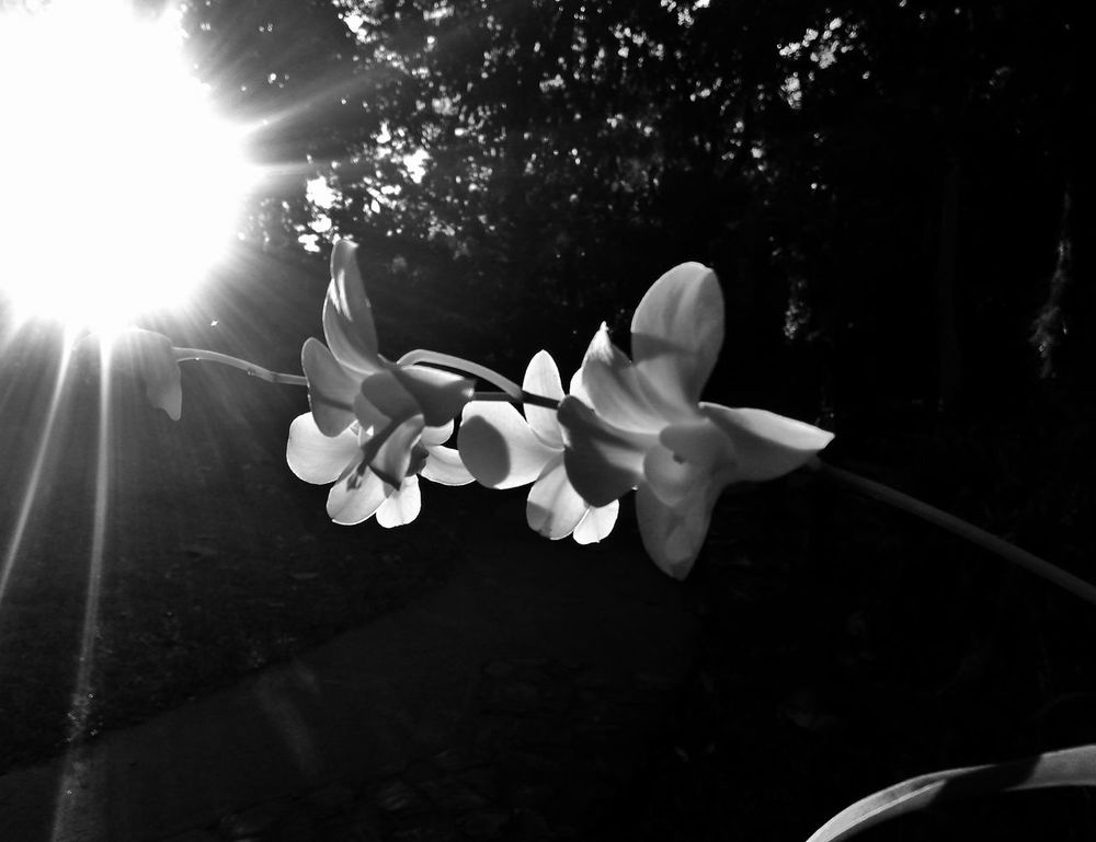 Flowers against the afternoon sun. Orchids Orchid Garden Flowers Sunset LamesaEcoPark Bwphotography Bw Blackandwhite Monochrome Beautiful