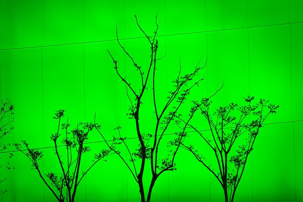 Green Green Color No People Backgrounds Tree Outdoors Close-up Modern Architecture Light And Shadow Light Architecture City Exhibition Modern City Life Architecture China No People, Modern Urban Colorful Abstract