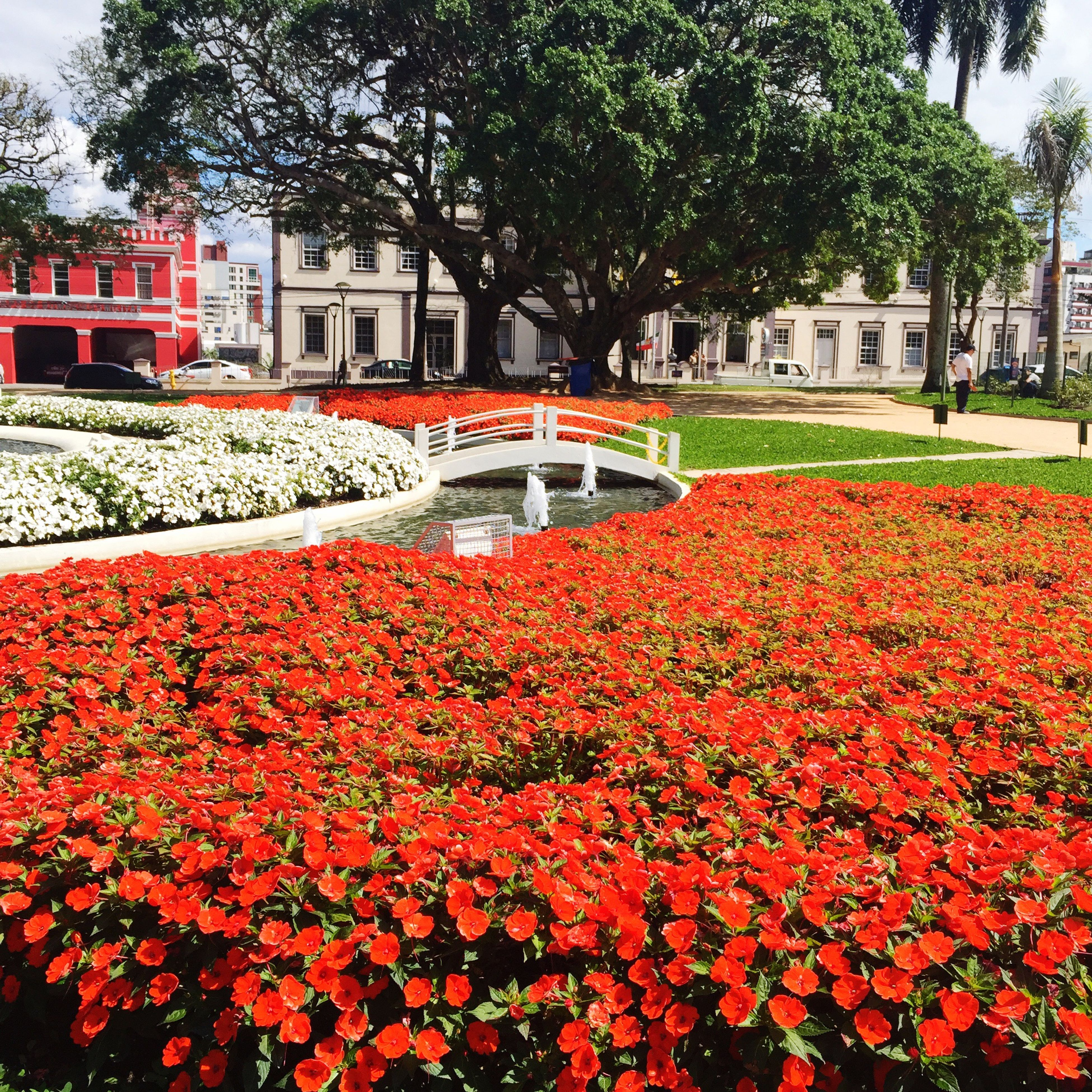 flower, red, architecture, building exterior, built structure, freshness, fragility, growth, flowerbed, abundance, day, beauty in nature, outdoors, nature, multi colored, flower bed, vibrant color, no people, springtime, red color, petal