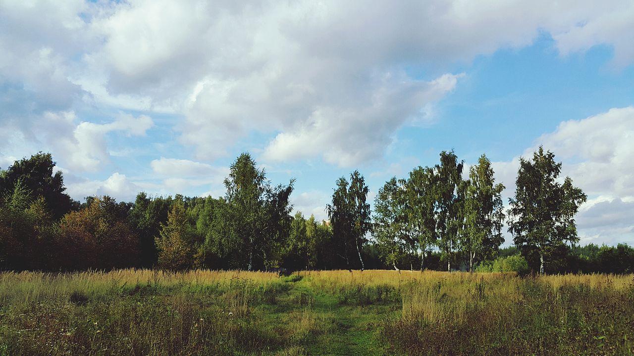 поле небо Лес Природа солнечныйдень осень ранняяосень Nature Nature_collection Sky Forest Autumn Autumn🍁🍁🍁 September September 2017 Earlyautumn