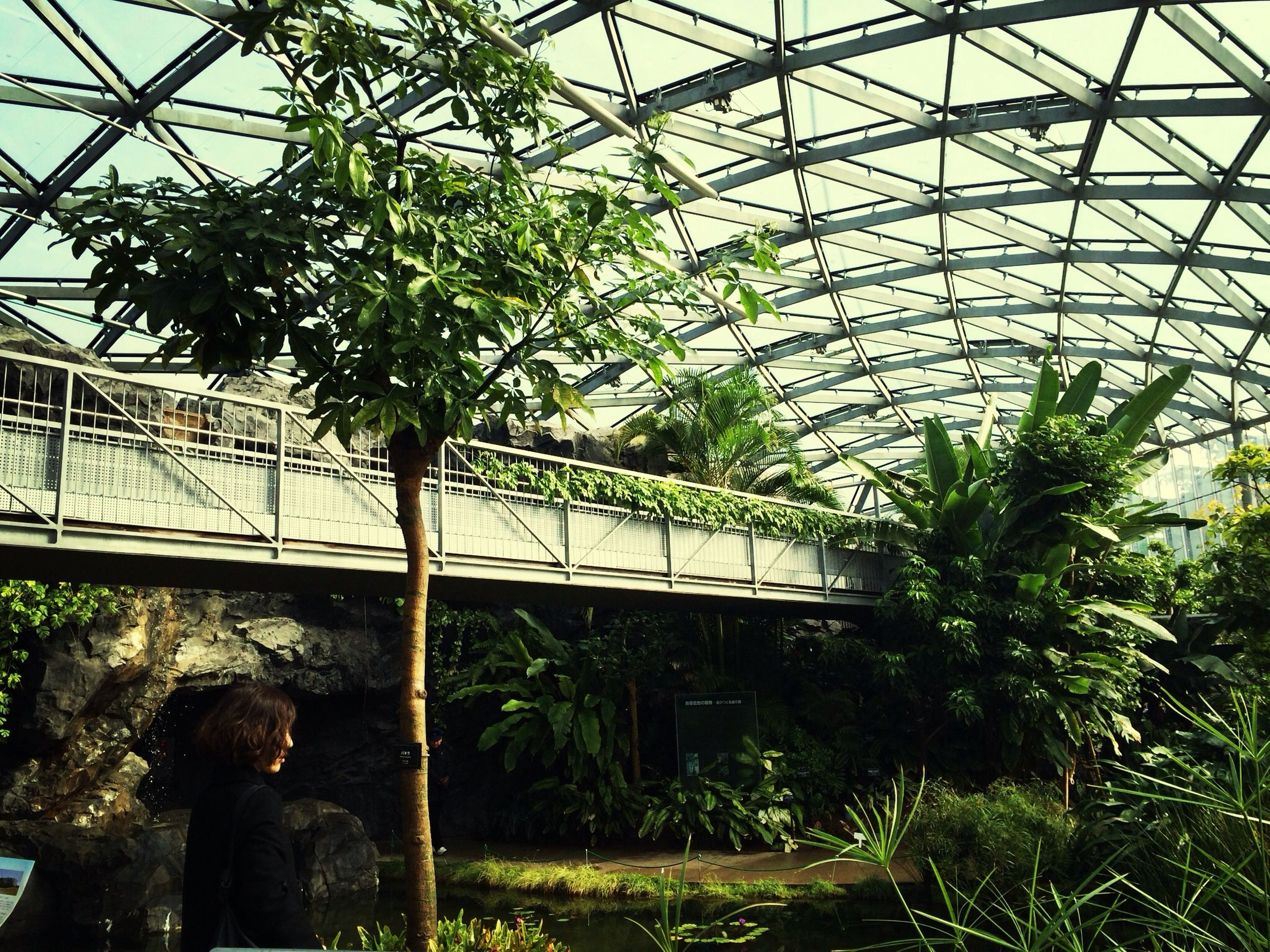 built structure, tree, architecture, lifestyles, men, leisure activity, rear view, standing, indoors, connection, person, plant, bridge - man made structure, day, metal, growth, full length, green color