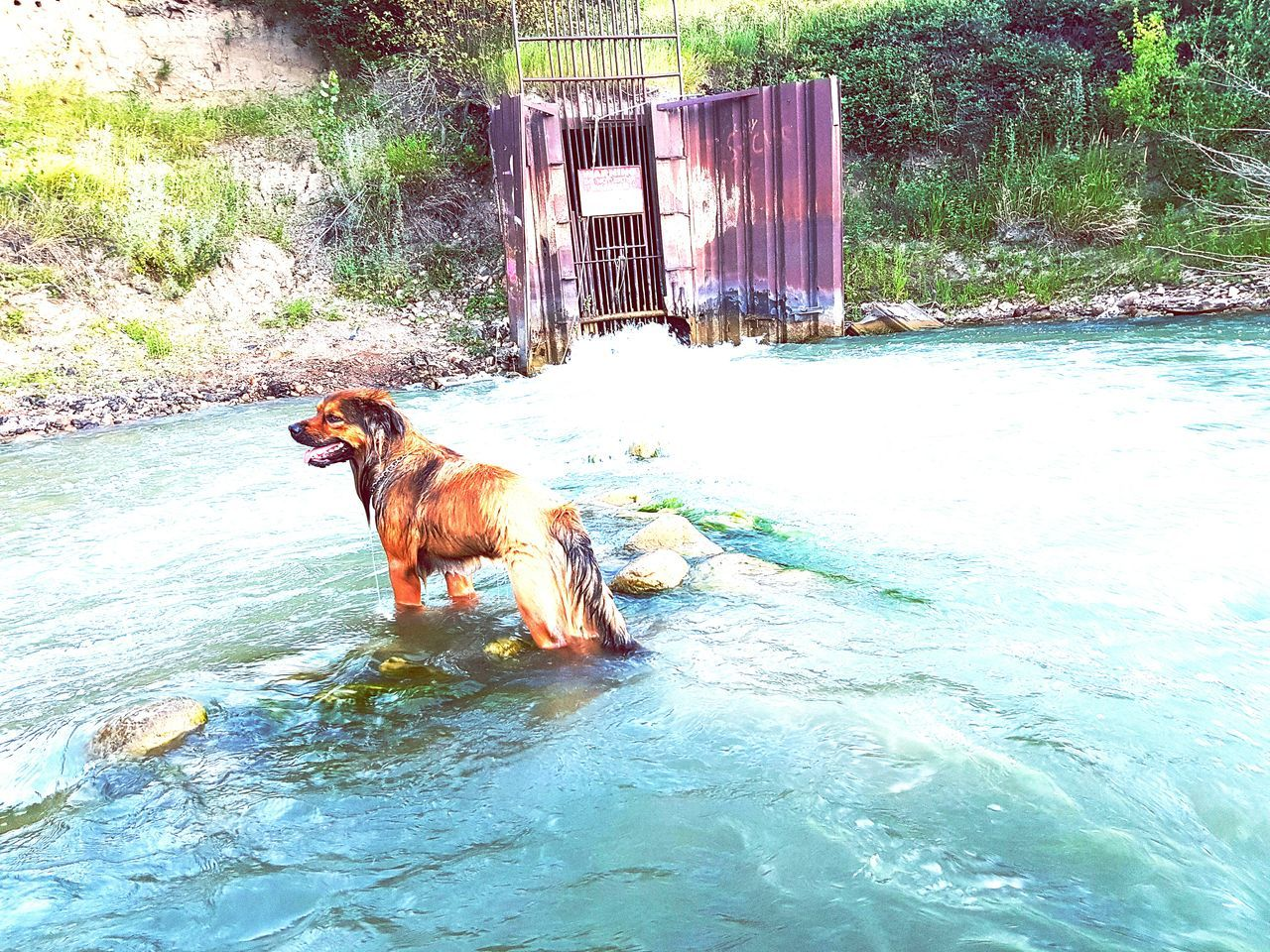 animal themes, one animal, mammal, domestic animals, dog, pets, water, day, outdoors, waterfront, no people, nature