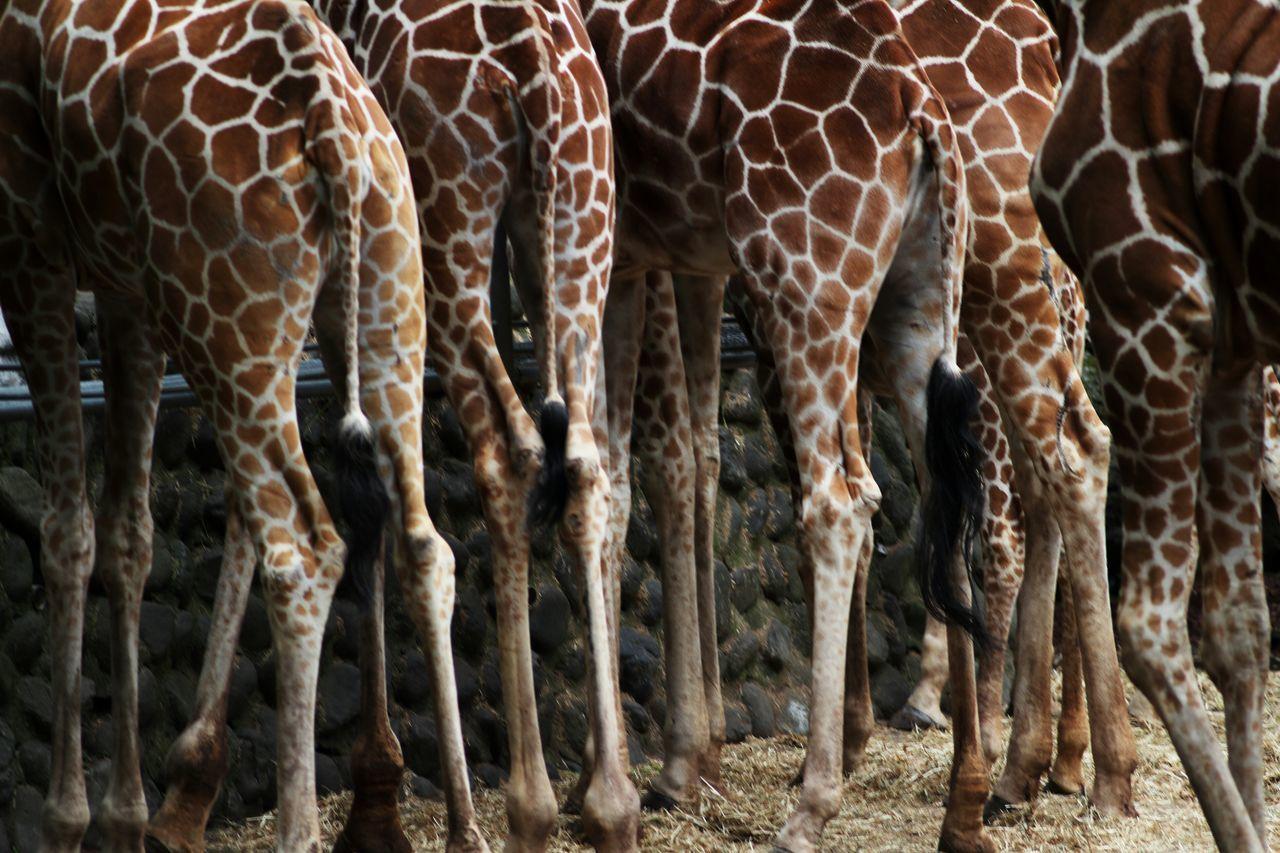 Learn & Shoot: Leading Lines Animals Giraffe