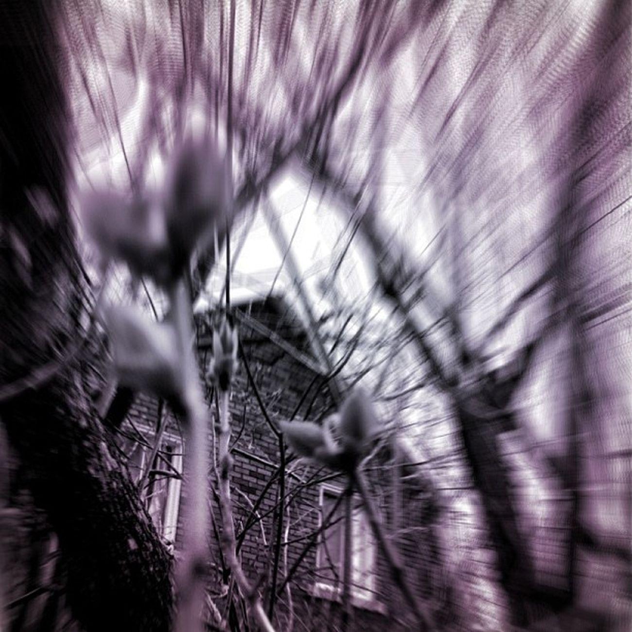 """All that we see or seem is but a dream within a dream."" ~Edgar Allan Poe #dream #dark #photo #blackandwhite #bnw #tone Blackandwhite Photo Dream Dark Bnw Tone Igdungeon Contestgram Ig_4every1_spooky Pf_arts"