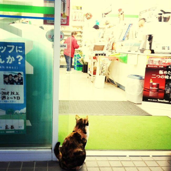 うぃ〜ん♬ IPhoneography Cat Eye4photography