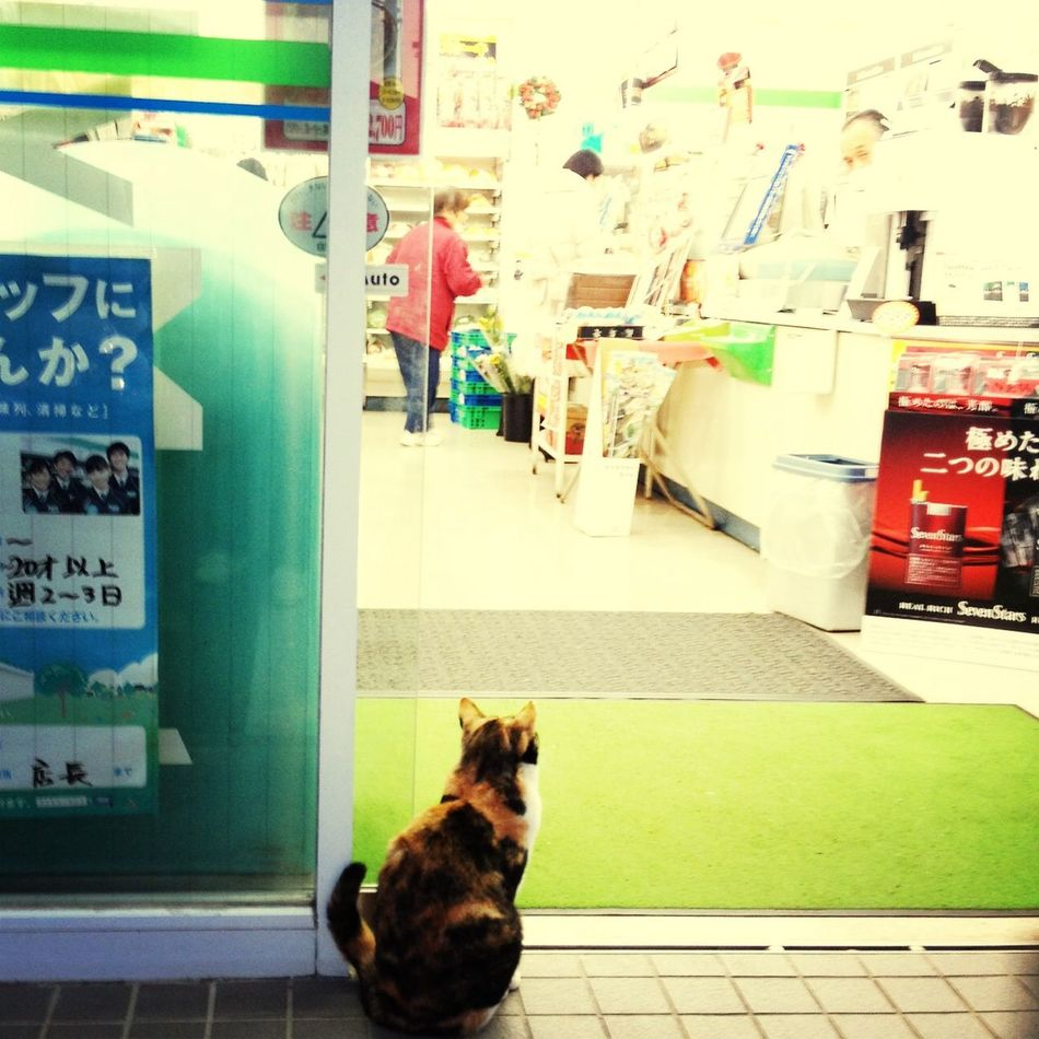 うぃ〜ん♬ IPhoneography Cat Eye4photography