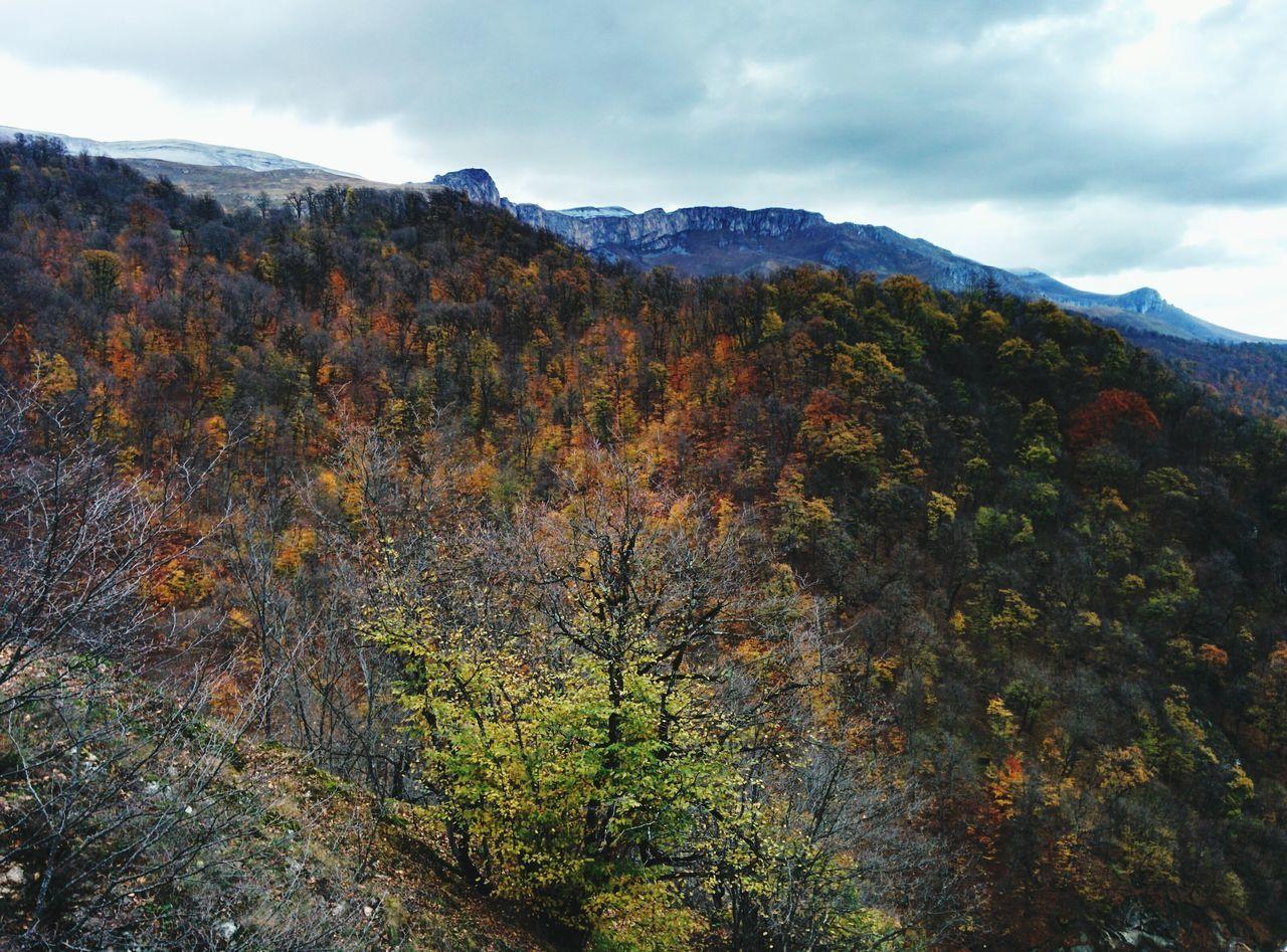 Stunning Highlands Autumn Colors EyeEm Nature Lover