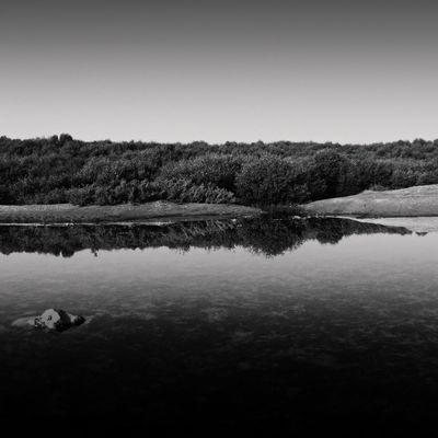 Gradations of mangroves life EyeEm Best Shots - Nature EyeEm Best Shots - Black + White Fine Art Photography Black & White EyeEm EyeEm Best Shots Black And White Monochrome
