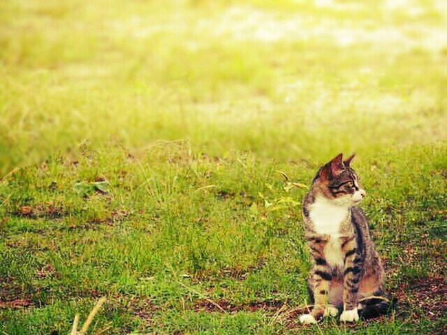 Cat Simplicity Keicomoment