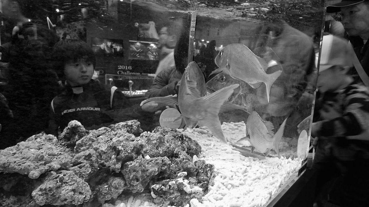 Japan Fishing Show 2016 Black And White Monochrome Fish Fish Tank People People Watching People Photography Hello World Enjoying Life パシフィコ横浜