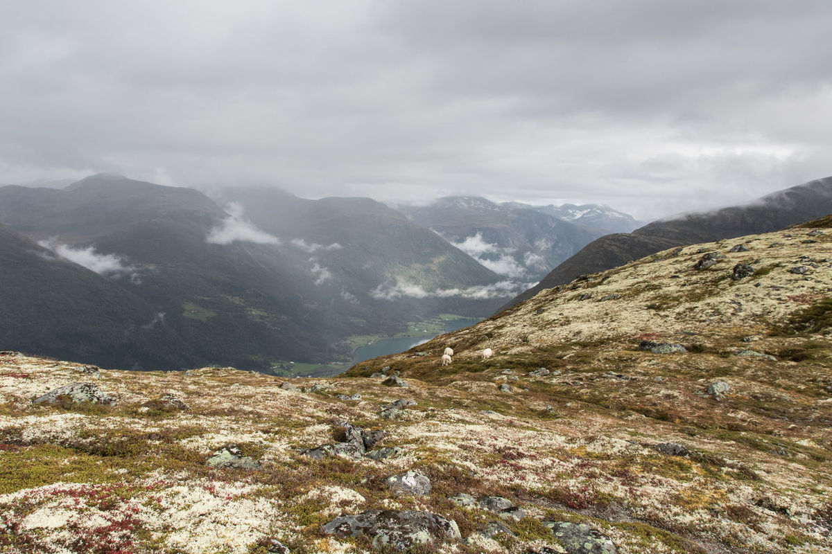 hiking in Norway Sheep Hiking Hikingadventures Wanderlust Norway Hoven Fog Rain Loen Loen Skylift View Scenics Mountain Mountain Range Nature No People Scenics Beauty In Nature Outdoors Landscape Cloud - Sky Day Tranquility