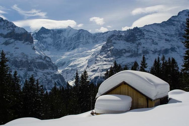 Winter White By CanvasPop Winter Snow Switzerland