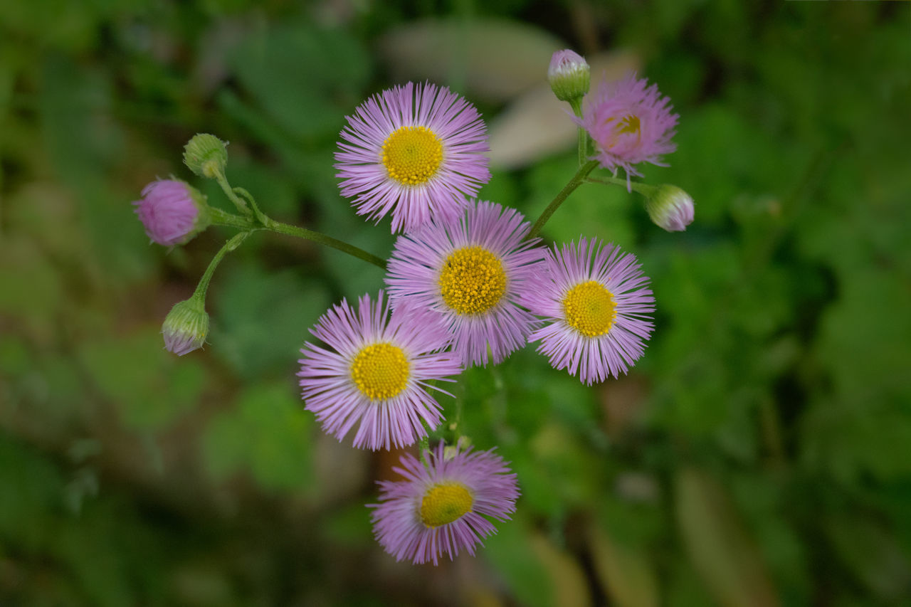 Flowers in Japan. Beauty In Nature Blooming Close-up Day Flower Flower Head Fragility Freshness Growth Japan Nature No People Outdoors Petal Plant