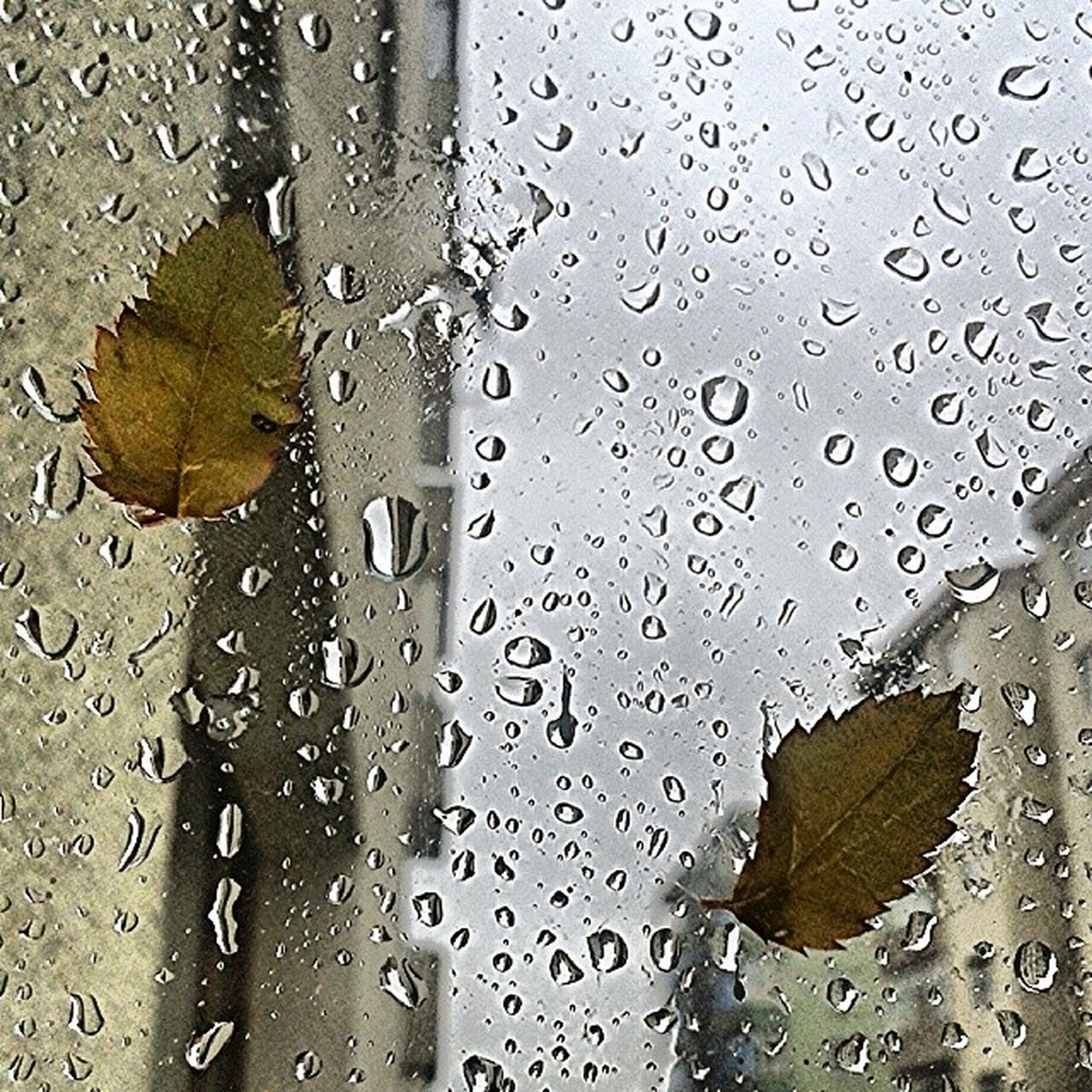 drop, wet, water, rain, raindrop, backgrounds, full frame, window, season, weather, close-up, transparent, glass - material, leaf, monsoon, droplet, indoors, focus on foreground, water drop, dew