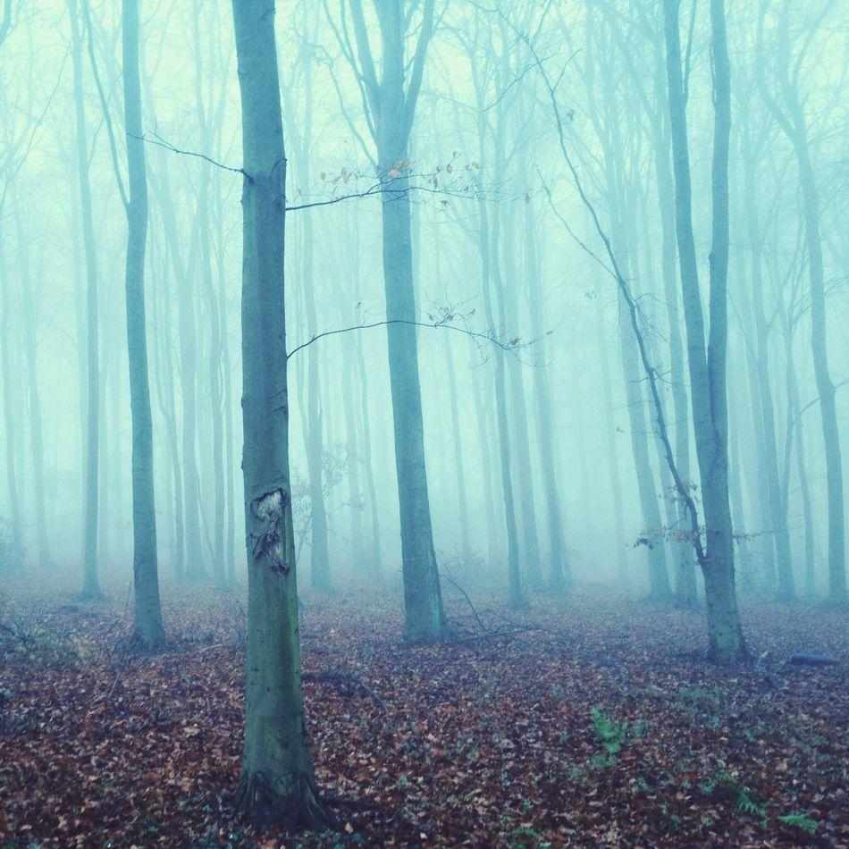 Brumous Vscocam Fog Trees Nature