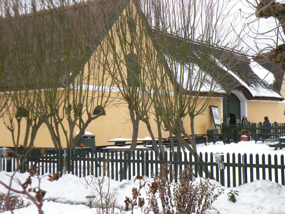 Tree Winter Cold Temperature Snow Nature Outdoors No People Branch Beauty In Nature Day Sky Countryside Built Structure Building Exterior Architecture Farmhouse Danmark Danish - at Amager Museum in Store Magleby on the island of Amager in Denmark