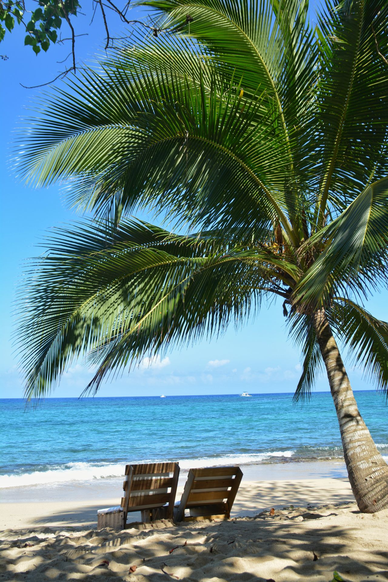Sea Beach Nature Water Beauty In Nature Horizon Over Water Tranquility Tree Vacations Clear Sky Sky Scenics No People Outdoors Sand Summer Tranquil Scene Day Palm Tree