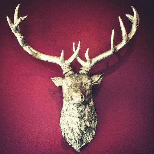 Oh my deer! Deers