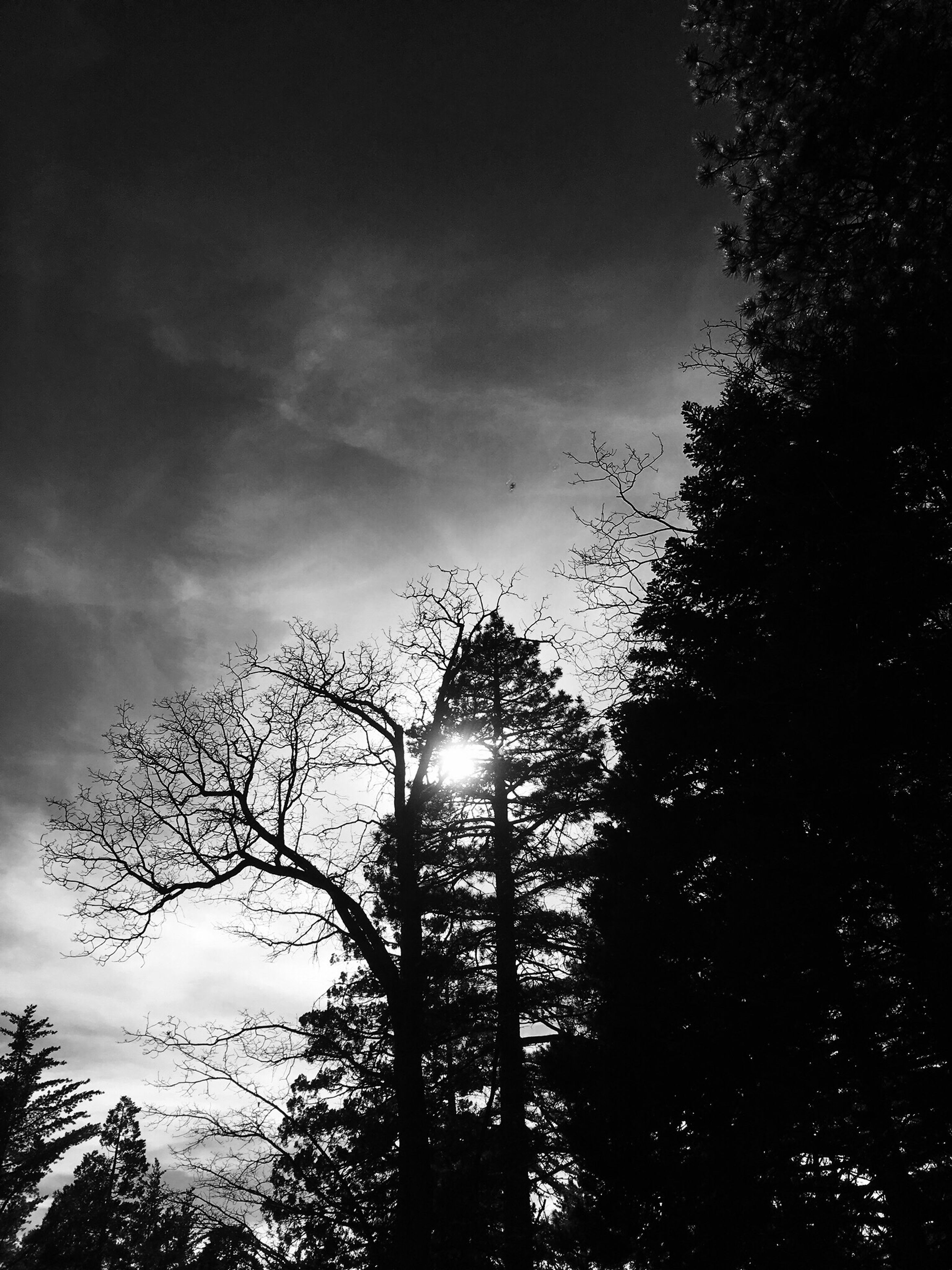 low angle view, silhouette, tree, sky, sun, beauty in nature, nature, tranquility, branch, scenics, growth, tranquil scene, sunset, cloud - sky, outdoors, bare tree, sunlight, no people, moon, back lit