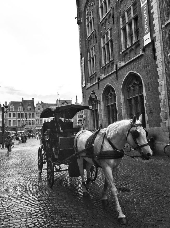 White horse Horse Architecture Street Streetphotography Streetphoto_bw Brugge