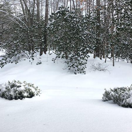 First Snowfall Hendersonville,NC
