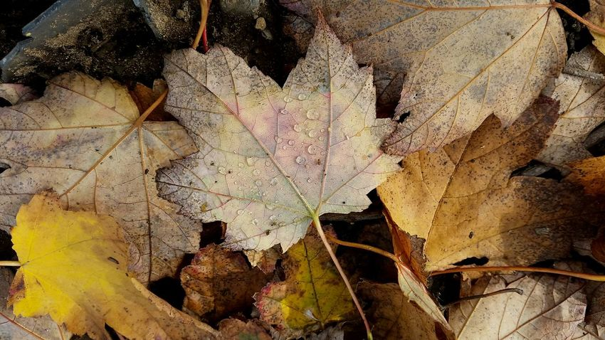 Autumn is officially here. Leaf Change Backgrounds Autumn Close-up Full Frame No People Nature Outdoors Day Fragility Horizontal Colors Warm Colors