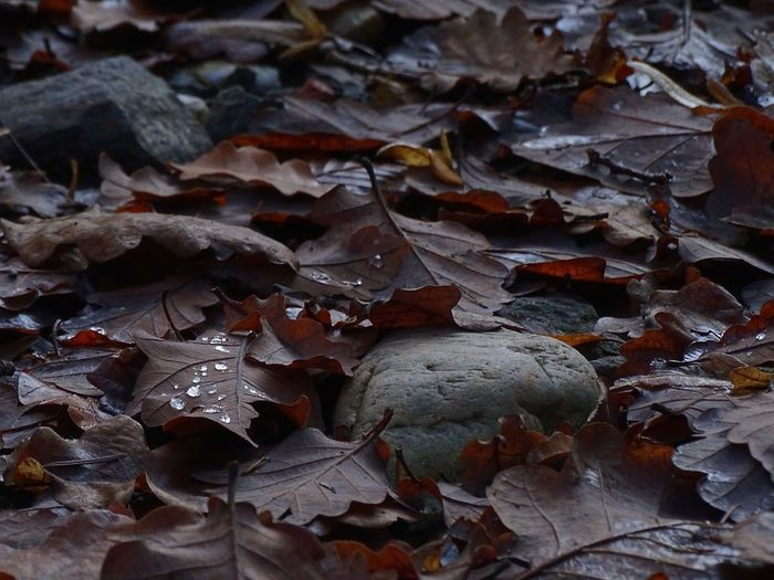 Leaf Autumn Change Dry Close-up Nature Full Frame Backgrounds No People Outdoors Beauty In Nature Fragility Day Droplet Wassertropfen