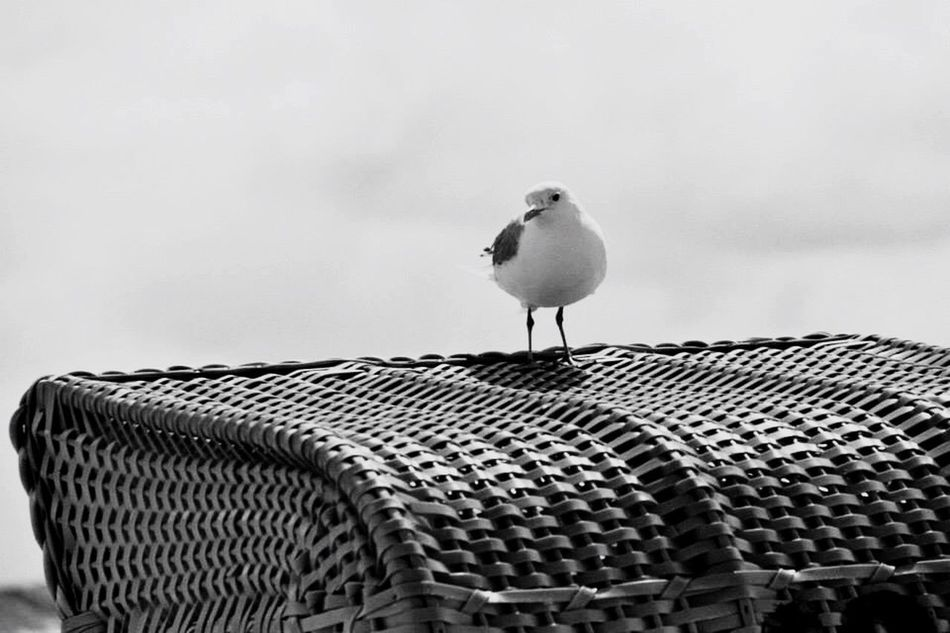 Beachchair Seagull Tranquility Tranquil Scene Solitude Sky Outdoors Shore Nature Loneliness No People Majestic Day Beauty In Nature Black And White Photography Close-up Summer Idyllic Beach Monochrome Photography