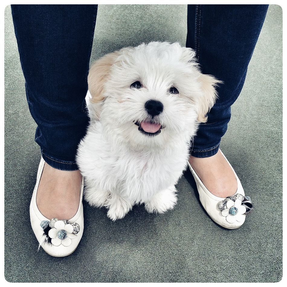 Adorable Animals Cute Dog Domestic Animals Happy Dog Leisure Activity Lifestyles Mammal Personal Perspective Pets Portrait Smile Smiling Dog Unrecognizable Person White Color