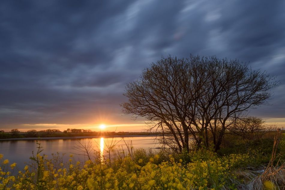 Beauty In Nature Tranquil Scene Sunset Seasonal Photography Outdoors Cloud - Sky Tree Rural Scene Countryside Golden Hour 菜の花 Flower Japan 夕焼け Sunset_collection Landscape_Collection